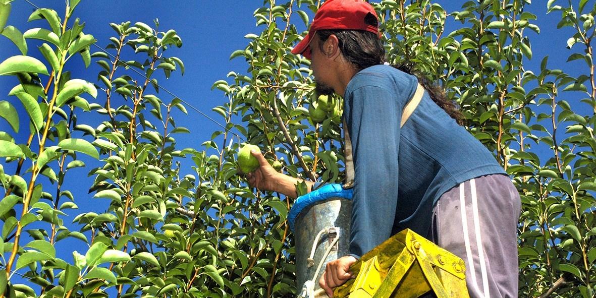 El gobierno bajó un peso las retenciones a la fruta