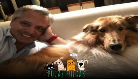 Conocé a Dylan, el perro de Alberto Fernández que se volvió famoso en las redes