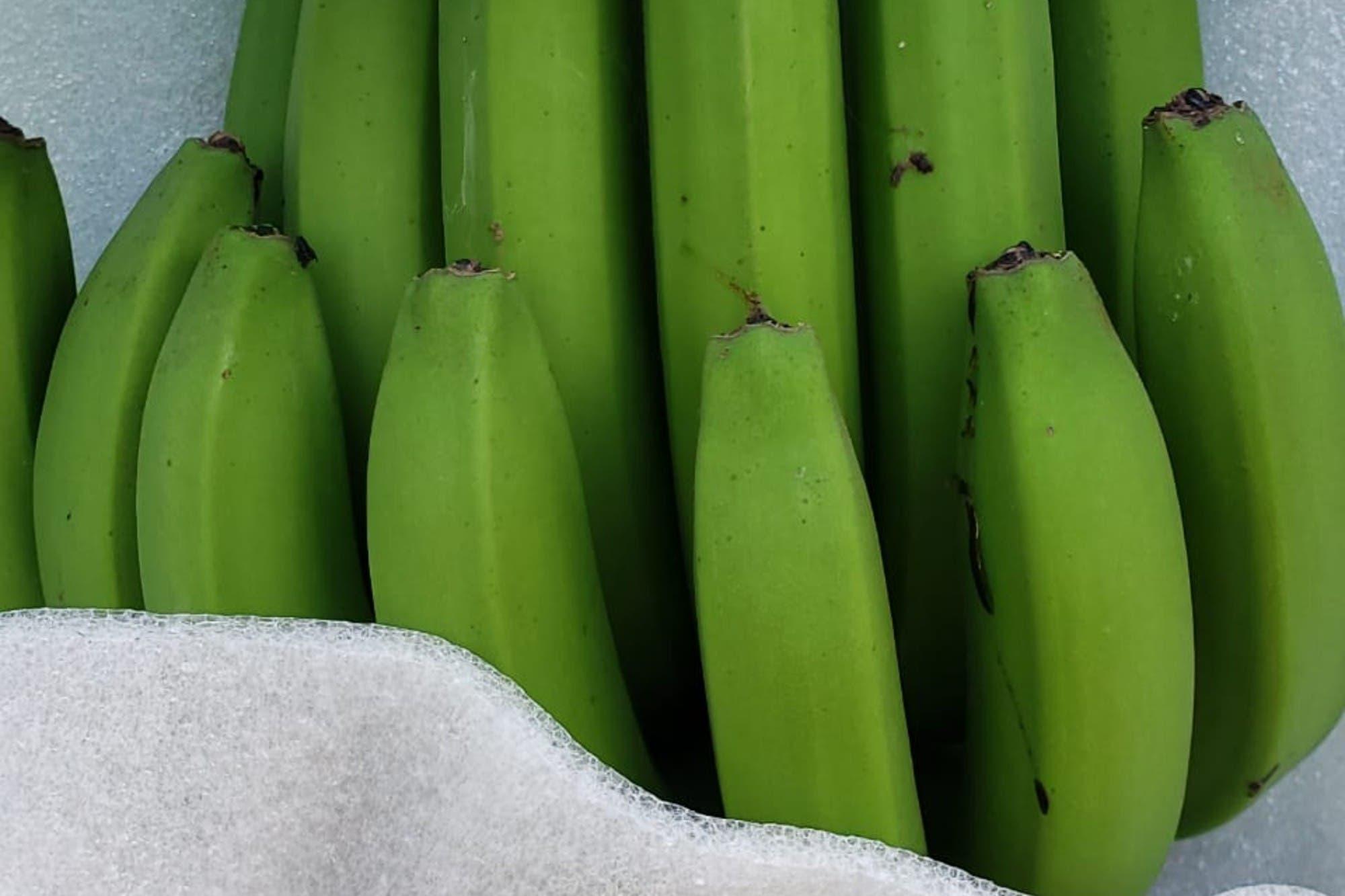 En Salta. Los hermanos que invirtieron US$6 millones para competir con las bananas del exterior