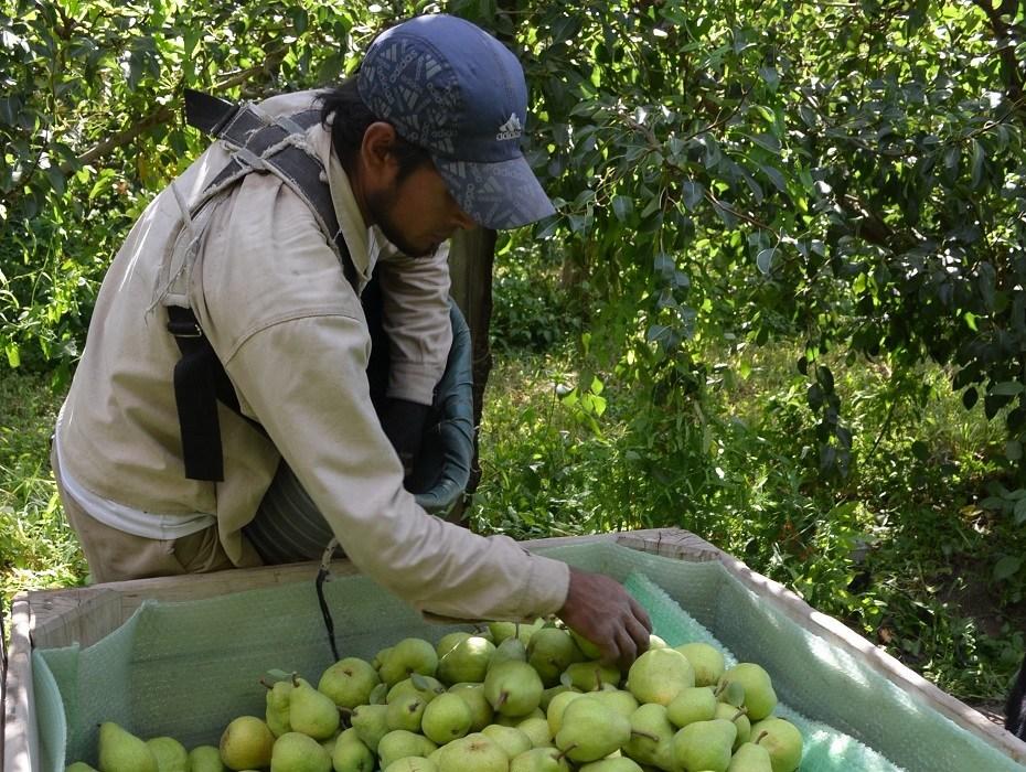 Créditos a productores para la sanidad frutícola
