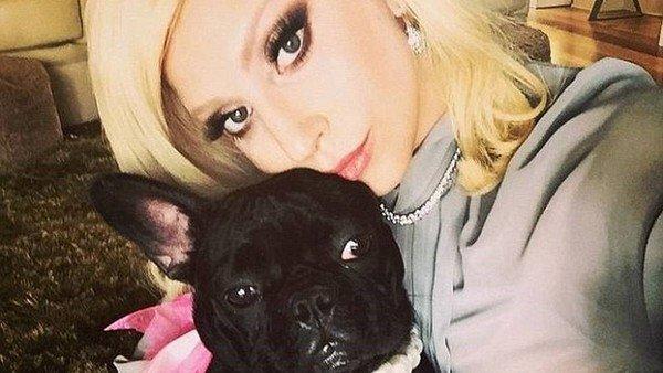 lady-gaga-recupero-sanos-y-salvos-los-dos-perros-que-le-robaron